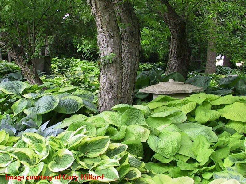 Arboretum.htm